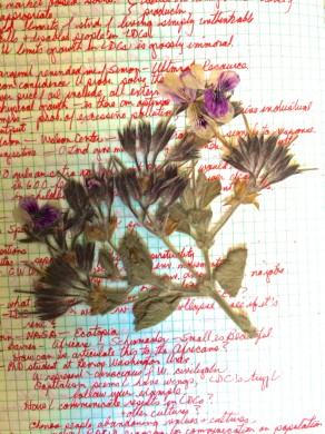 page of Dana's journal with a dried flower specimen